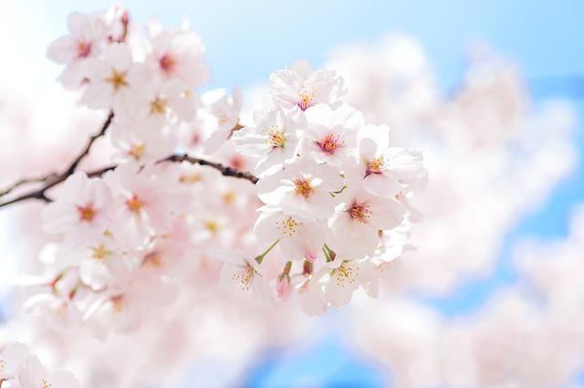 昭島市のお花見スポット